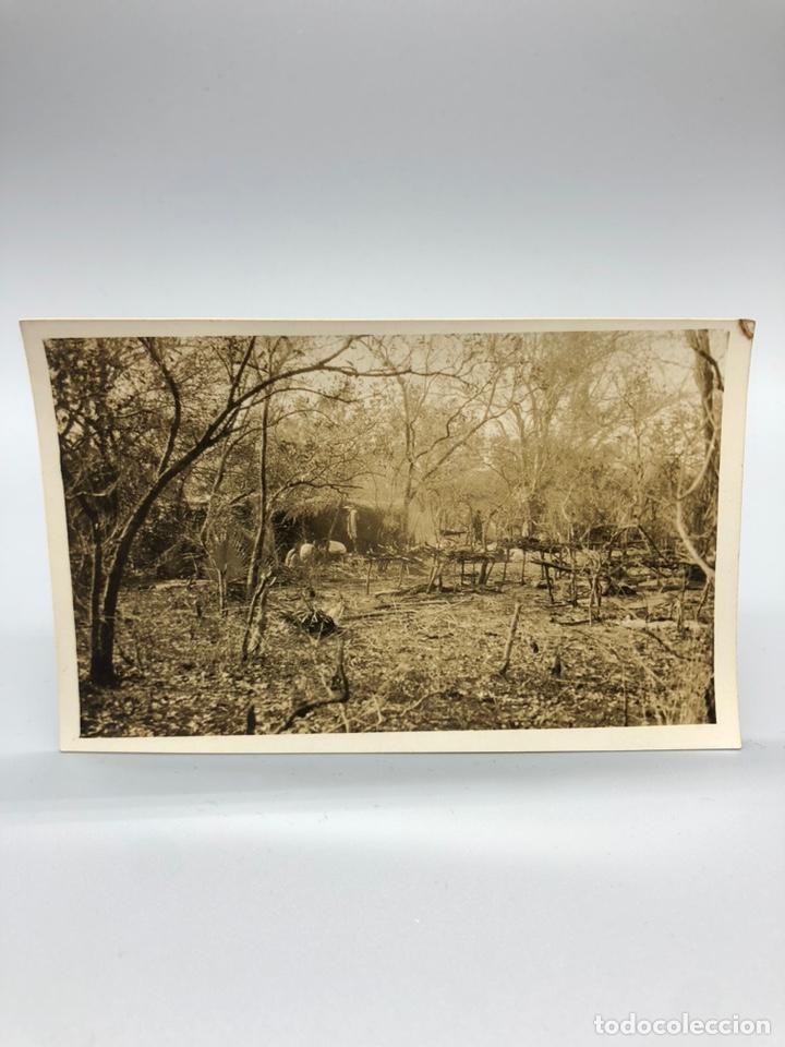 Fotografía antigua: Lote de 108 antiguas fotografías Africa cazadores de animales africanos ,elefantes,marfil... - Foto 66 - 247280240