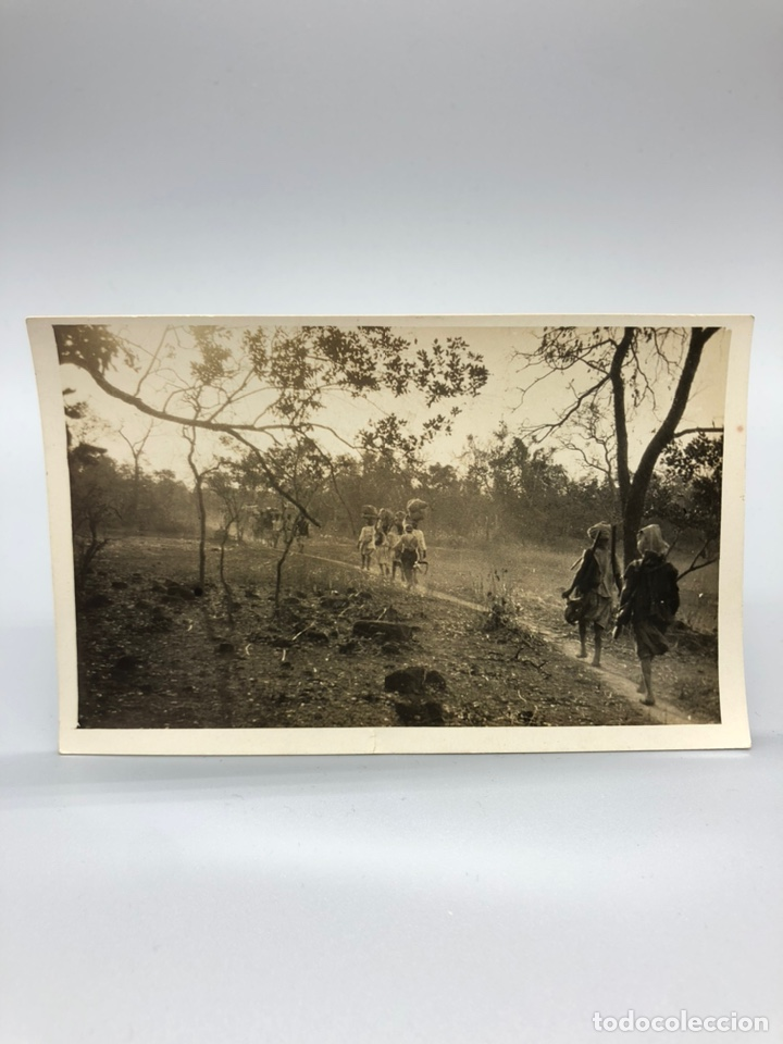 Fotografía antigua: Lote de 108 antiguas fotografías Africa cazadores de animales africanos ,elefantes,marfil... - Foto 67 - 247280240