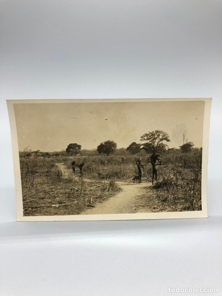 Fotografía antigua: Lote de 108 antiguas fotografías Africa cazadores de animales africanos ,elefantes,marfil... - Foto 69 - 247280240