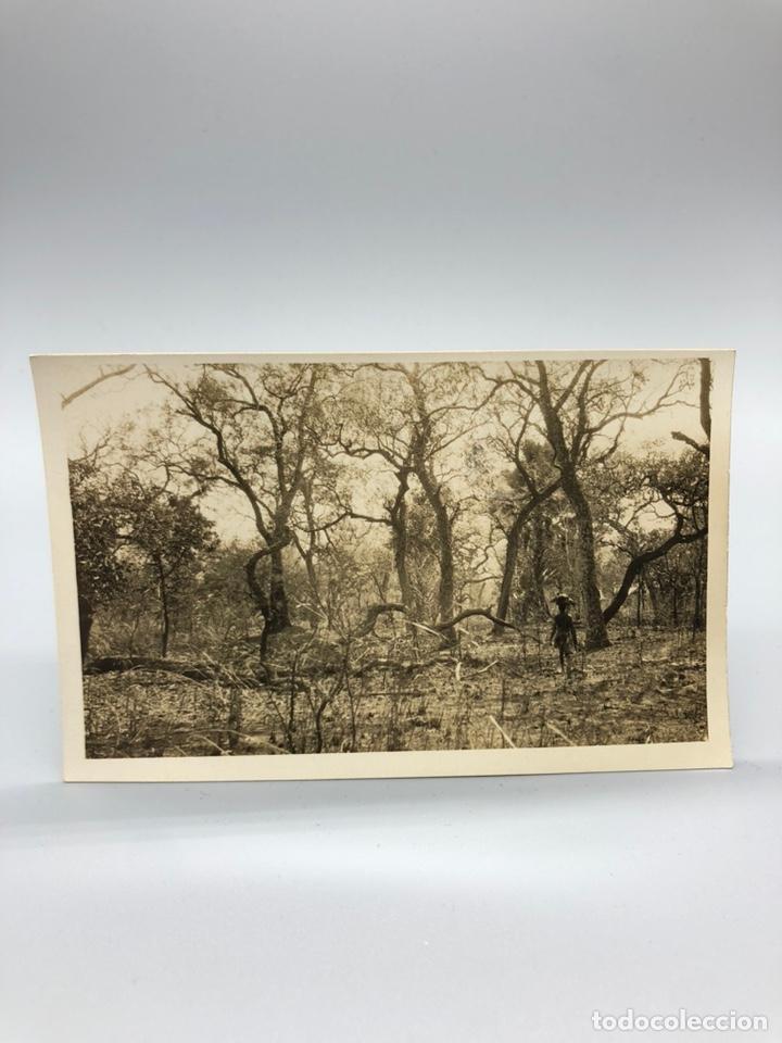 Fotografía antigua: Lote de 108 antiguas fotografías Africa cazadores de animales africanos ,elefantes,marfil... - Foto 70 - 247280240