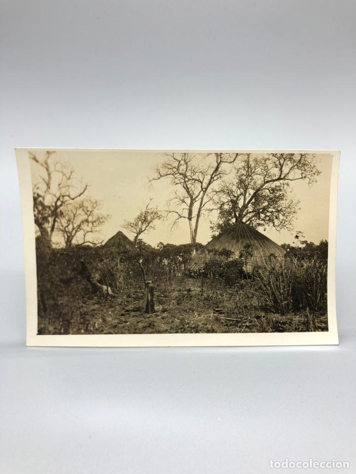 Fotografía antigua: Lote de 108 antiguas fotografías Africa cazadores de animales africanos ,elefantes,marfil... - Foto 73 - 247280240