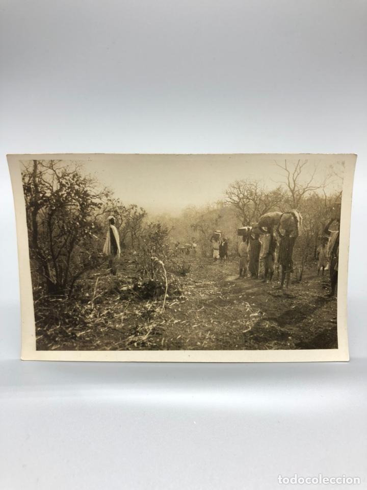 Fotografía antigua: Lote de 108 antiguas fotografías Africa cazadores de animales africanos ,elefantes,marfil... - Foto 76 - 247280240