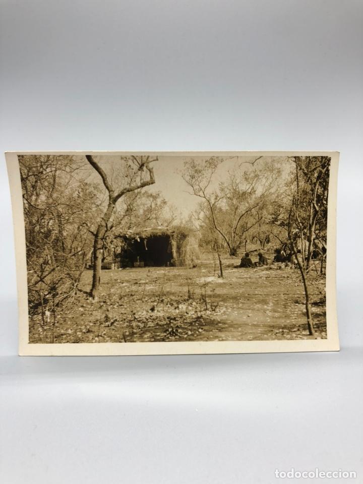 Fotografía antigua: Lote de 108 antiguas fotografías Africa cazadores de animales africanos ,elefantes,marfil... - Foto 77 - 247280240