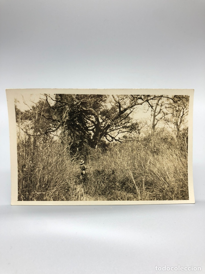 Fotografía antigua: Lote de 108 antiguas fotografías Africa cazadores de animales africanos ,elefantes,marfil... - Foto 78 - 247280240