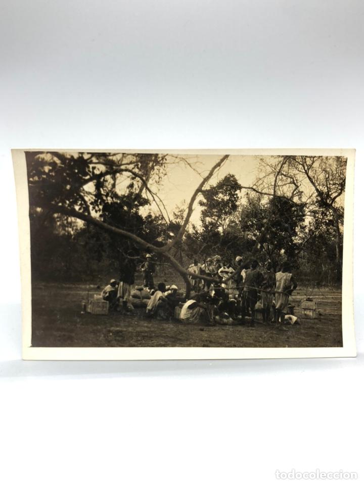 Fotografía antigua: Lote de 108 antiguas fotografías Africa cazadores de animales africanos ,elefantes,marfil... - Foto 80 - 247280240