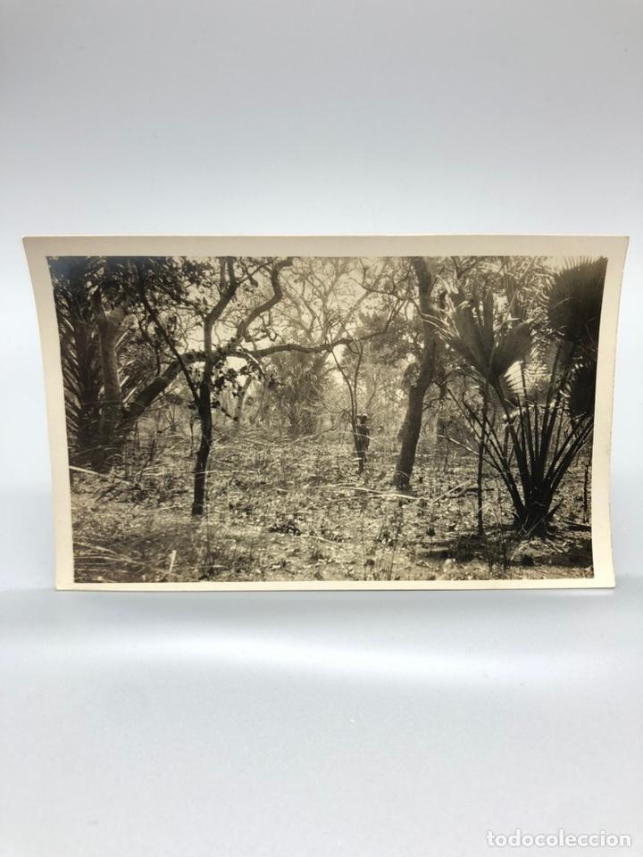 Fotografía antigua: Lote de 108 antiguas fotografías Africa cazadores de animales africanos ,elefantes,marfil... - Foto 83 - 247280240