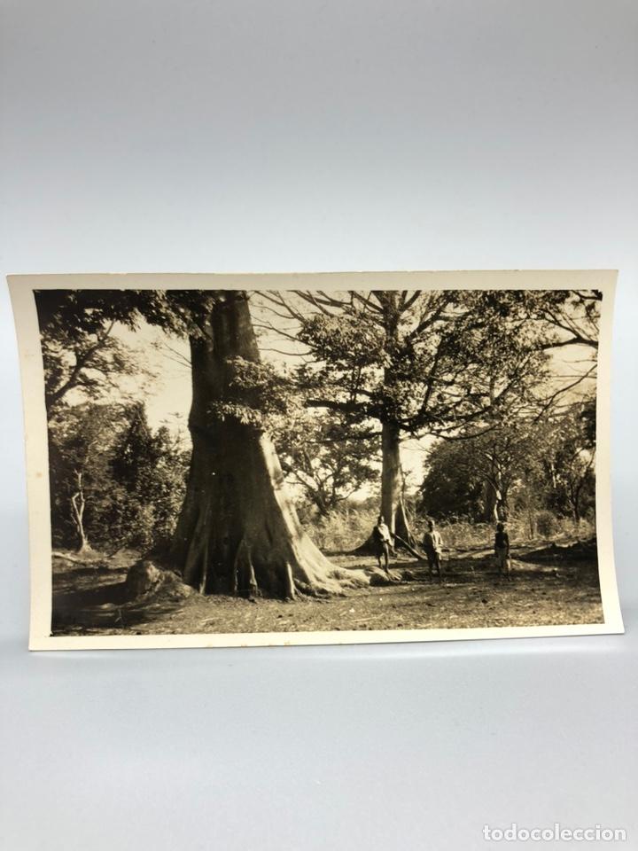 Fotografía antigua: Lote de 108 antiguas fotografías Africa cazadores de animales africanos ,elefantes,marfil... - Foto 84 - 247280240