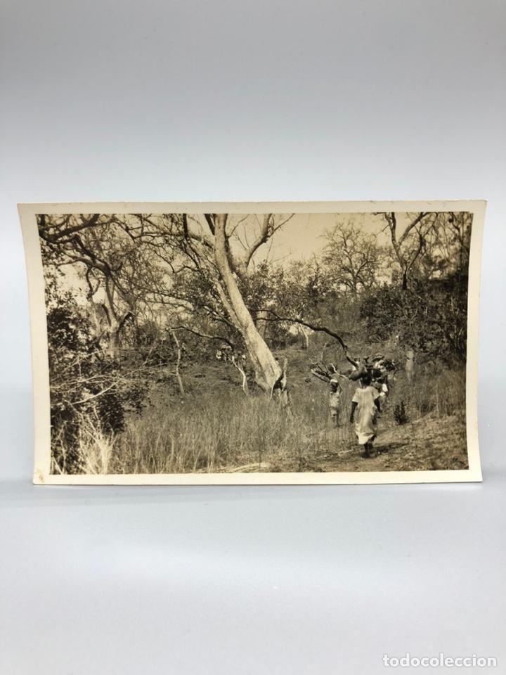 Fotografía antigua: Lote de 108 antiguas fotografías Africa cazadores de animales africanos ,elefantes,marfil... - Foto 85 - 247280240