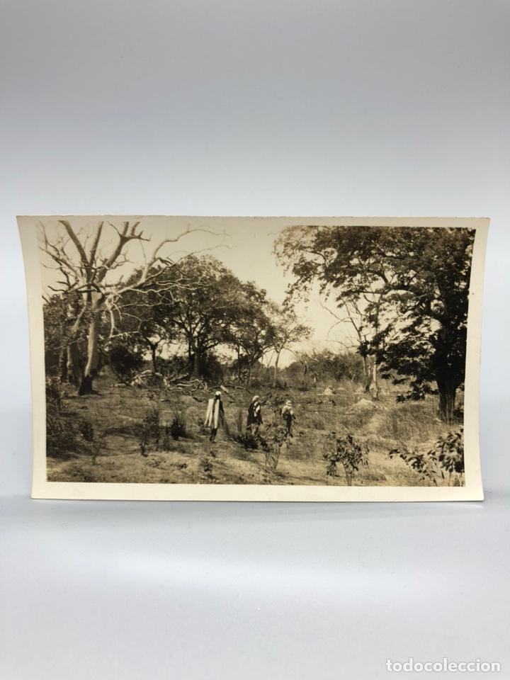 Fotografía antigua: Lote de 108 antiguas fotografías Africa cazadores de animales africanos ,elefantes,marfil... - Foto 86 - 247280240