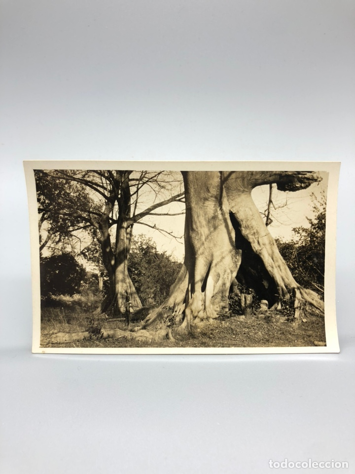 Fotografía antigua: Lote de 108 antiguas fotografías Africa cazadores de animales africanos ,elefantes,marfil... - Foto 87 - 247280240