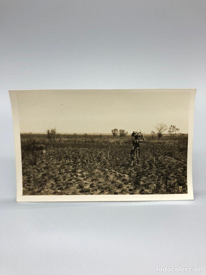 Fotografía antigua: Lote de 108 antiguas fotografías Africa cazadores de animales africanos ,elefantes,marfil... - Foto 89 - 247280240