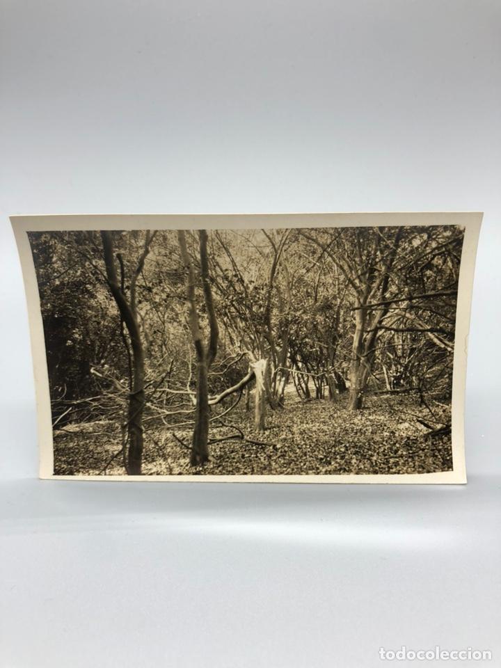 Fotografía antigua: Lote de 108 antiguas fotografías Africa cazadores de animales africanos ,elefantes,marfil... - Foto 91 - 247280240