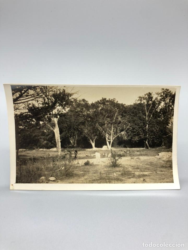 Fotografía antigua: Lote de 108 antiguas fotografías Africa cazadores de animales africanos ,elefantes,marfil... - Foto 93 - 247280240
