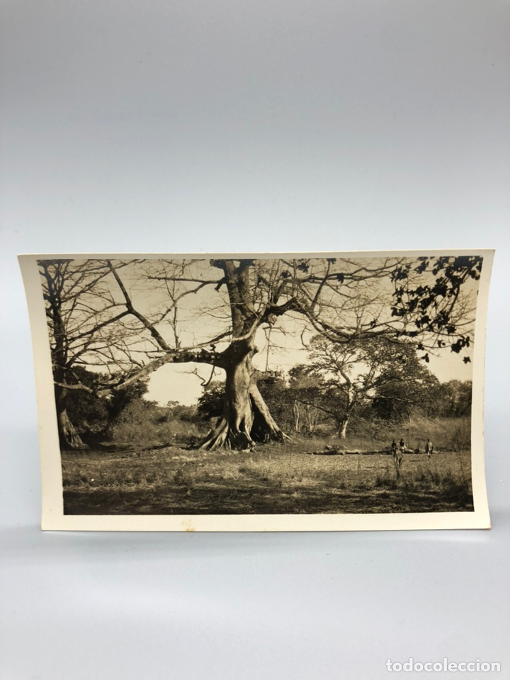 Fotografía antigua: Lote de 108 antiguas fotografías Africa cazadores de animales africanos ,elefantes,marfil... - Foto 94 - 247280240