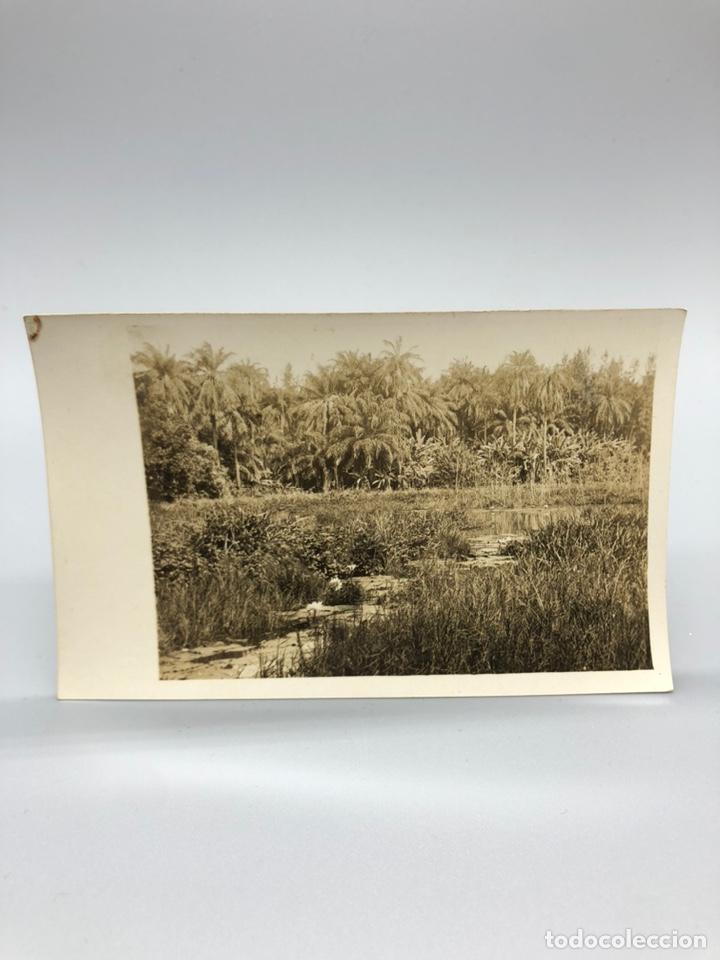 Fotografía antigua: Lote de 108 antiguas fotografías Africa cazadores de animales africanos ,elefantes,marfil... - Foto 96 - 247280240