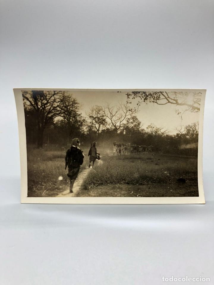 Fotografía antigua: Lote de 108 antiguas fotografías Africa cazadores de animales africanos ,elefantes,marfil... - Foto 97 - 247280240