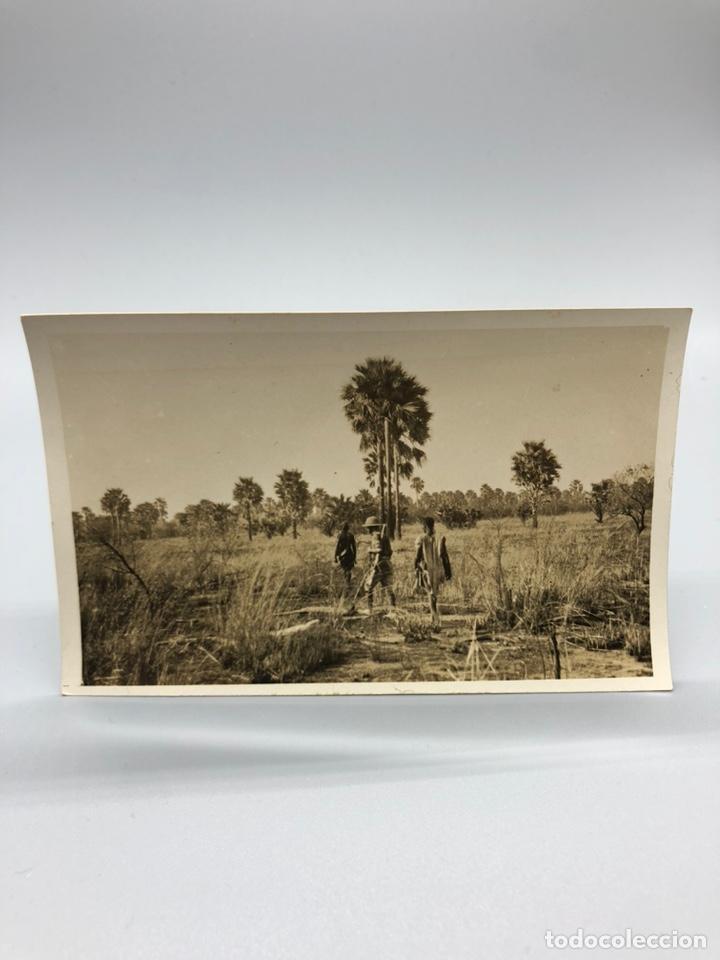 Fotografía antigua: Lote de 108 antiguas fotografías Africa cazadores de animales africanos ,elefantes,marfil... - Foto 98 - 247280240