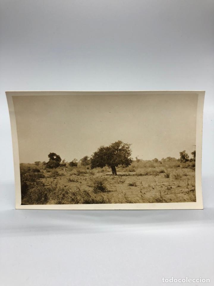Fotografía antigua: Lote de 108 antiguas fotografías Africa cazadores de animales africanos ,elefantes,marfil... - Foto 100 - 247280240