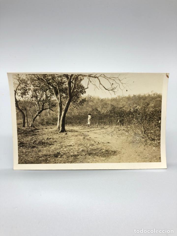 Fotografía antigua: Lote de 108 antiguas fotografías Africa cazadores de animales africanos ,elefantes,marfil... - Foto 101 - 247280240