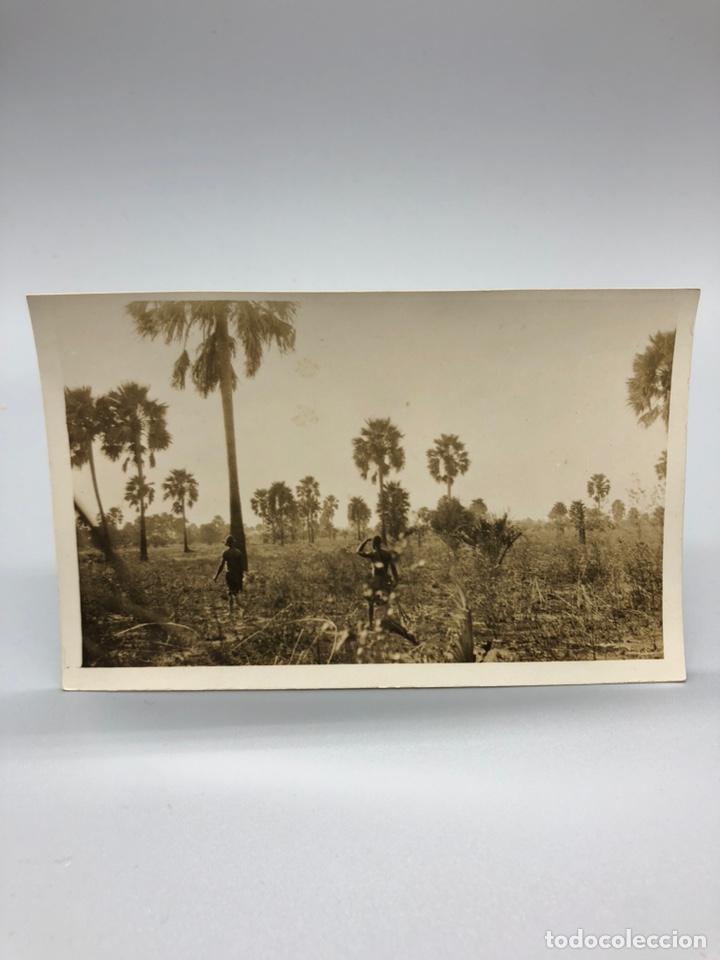Fotografía antigua: Lote de 108 antiguas fotografías Africa cazadores de animales africanos ,elefantes,marfil... - Foto 102 - 247280240