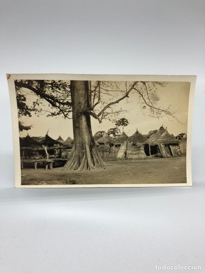 Fotografía antigua: Lote de 108 antiguas fotografías Africa cazadores de animales africanos ,elefantes,marfil... - Foto 103 - 247280240