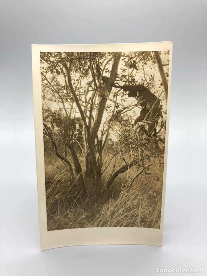 Fotografía antigua: Lote de 108 antiguas fotografías Africa cazadores de animales africanos ,elefantes,marfil... - Foto 104 - 247280240