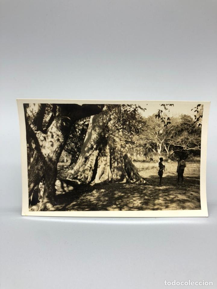 Fotografía antigua: Lote de 108 antiguas fotografías Africa cazadores de animales africanos ,elefantes,marfil... - Foto 106 - 247280240