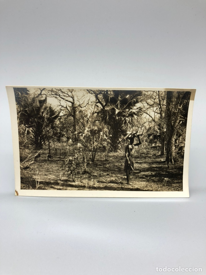 Fotografía antigua: Lote de 108 antiguas fotografías Africa cazadores de animales africanos ,elefantes,marfil... - Foto 110 - 247280240