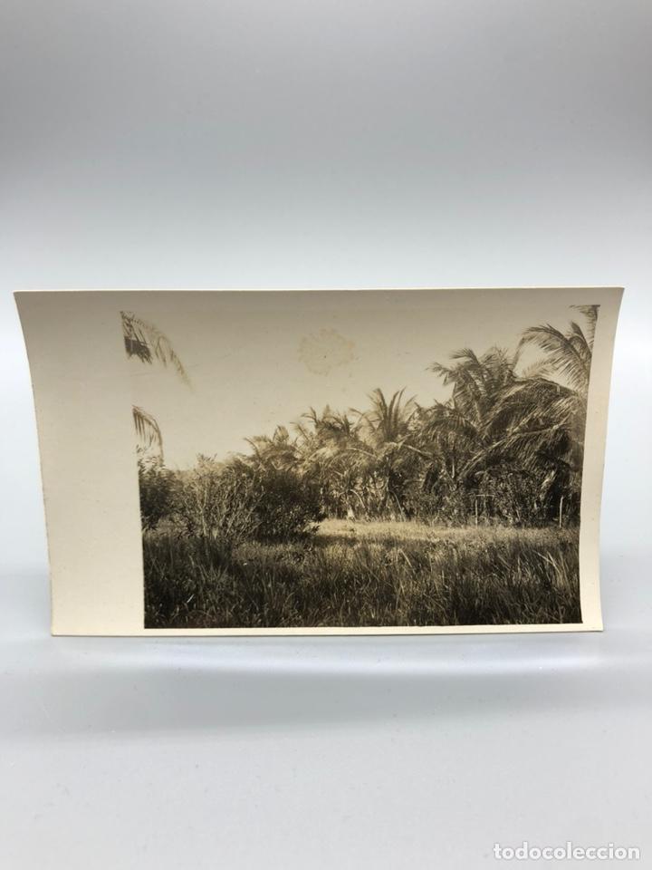 Fotografía antigua: Lote de 108 antiguas fotografías Africa cazadores de animales africanos ,elefantes,marfil... - Foto 111 - 247280240