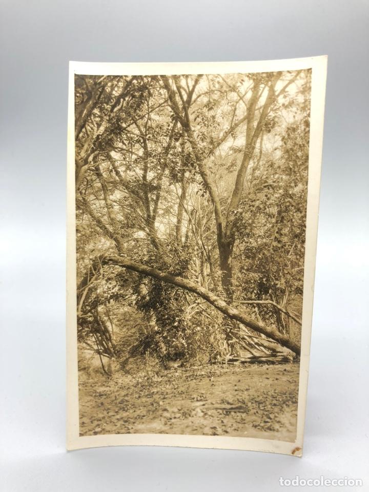 Fotografía antigua: Lote de 108 antiguas fotografías Africa cazadores de animales africanos ,elefantes,marfil... - Foto 112 - 247280240