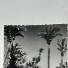 Fotografía antigua: POSTAL ELCHE, SÁNCHEZ, Nº301 PAISAJE. Lote 254804305