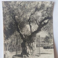 Fotografia antica: LIRIA OLIVO SIRVIO DE PULPITO A SAN VICENTE FERRER FOTOGRAFO DOMINGO URIEL. Lote 276528413