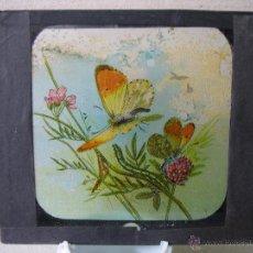 Cristal a plumilla de mariposa. Proyecciones Motteri, Radiguet & Massiot. Paris