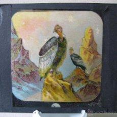 Cristal a plumilla de aves. Proyecciones Motteri, Radiguet & Massiot. Paris