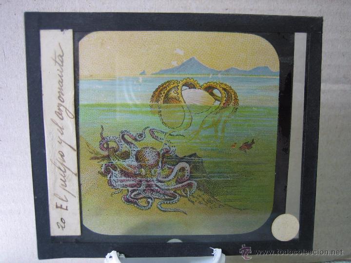 Fotografía antigua: Cristal a plumilla de peces.Proyecciones Motteri, Radiguet & Massiot. Paris - Foto 2 - 50224542
