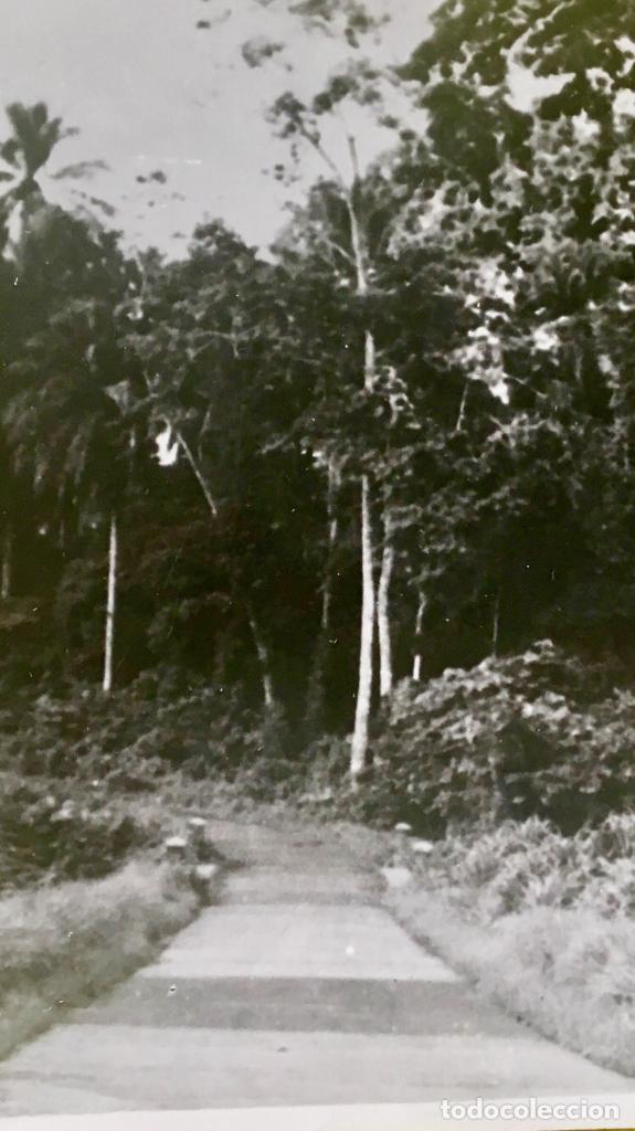 Fotografía antigua: Bariloche Argentina foto blanco negro carretera santa Isabel a san carlos vegetacion Arboles - Foto 5 - 62813020