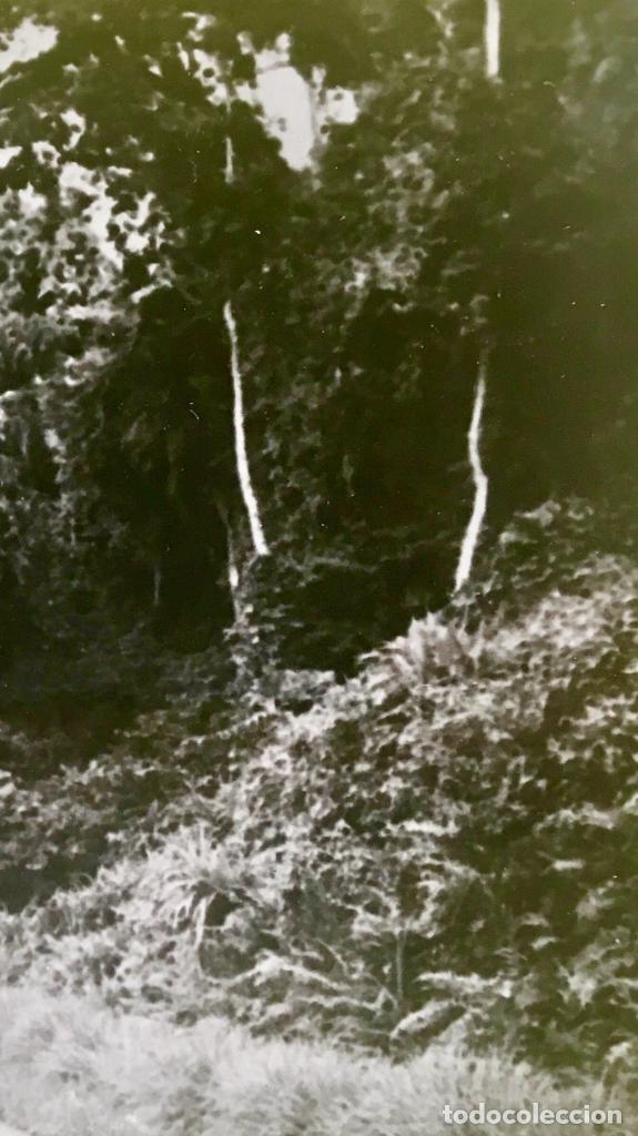 Fotografía antigua: Bariloche Argentina foto blanco negro carretera santa Isabel a san carlos vegetacion Arboles - Foto 6 - 62813020
