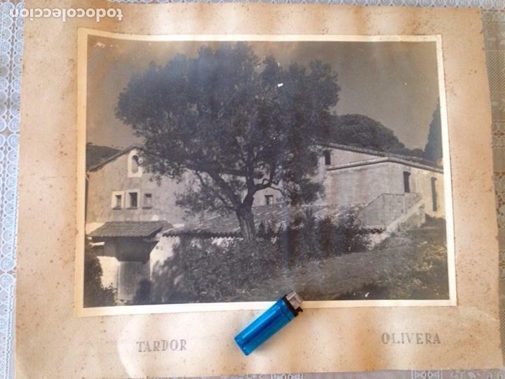 ANTIGUA FOTOGRAFÍA IMAGEN DE PAISAJE NUMERADA 39X29.5, VER FOTOS (Fotografía Antigua - Ambrotipos, Daguerrotipos y Ferrotipos)