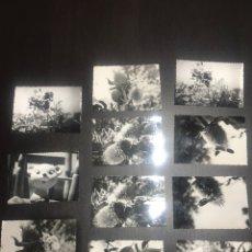 Fotografía antigua: LOTE DE FOTOGRAFÍAS ANTIGUAS. Lote 162805922