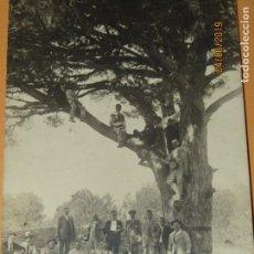 Fotografía antigua: ANTIGUA FOTOGRAFÍA EN BLANCO Y NEGRO - PINO GIGANTE EN CAMPO DE VALENCIA - AÑO 1920S.. Lote 167058724