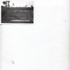 Fotografía antigua: VISTA DE ANIMALES EN CAUTIVIDAD - 10.7 X 7.5 -. Lote 11185478
