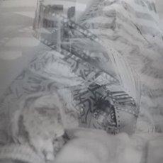 Fotografía antigua: ARTIGRAFÍA DE MAT SIGÜI - BODEGÓN DE SOMBRAS - 30 X 40 CMS - FIRMADA Y CON DEDICATORIA PERSONALIZADA. Lote 16132458