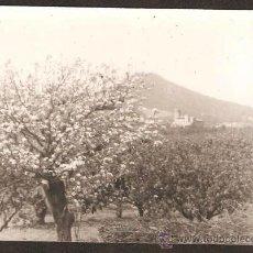 Fotografía antigua: HORTES DE SANT BOI DE LLOBREGAT. AL FONS TORRE SALVANA DE SANTA COLOMA DE CERVELLÓ. ANY 1967. Lote 31322797