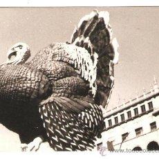 Fotografía antigua: VALENCIA. FALLA PLAZA DEL CAUDILLO AÑO 1976. Lote 33473007