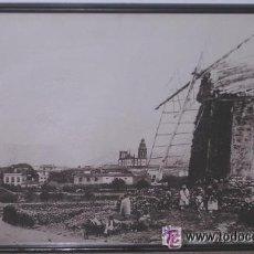 Fotografía antigua: LA LAGUNA-TENERIFE- ANTIGUA VISTA PANORÁMICA DE LA CIUDAD; 45 X 61 CM; VER DETALLES. Lote 41254221