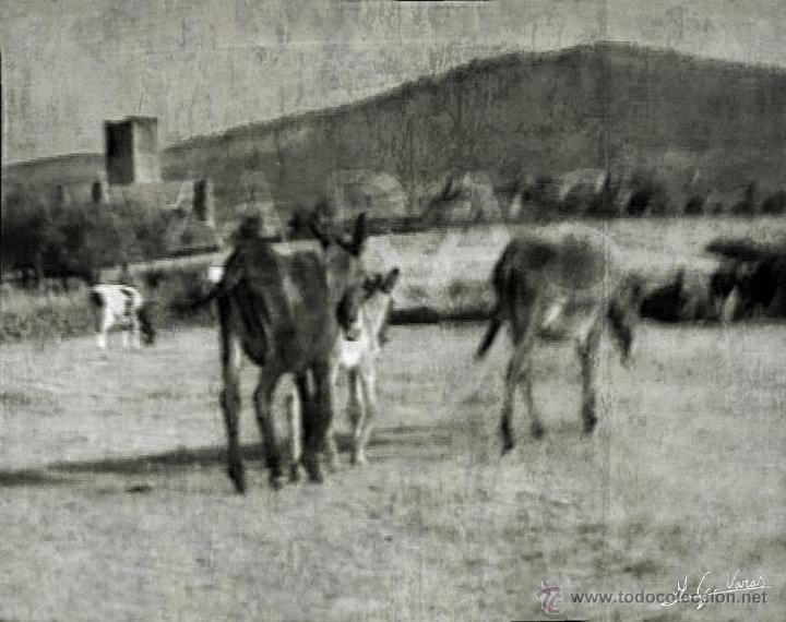 FOTOGRAFIA RURAL EN BLANCO Y NEGRO. SALAMANCA, MIDE 30 X 21 CM. (Fotografía - Artística)