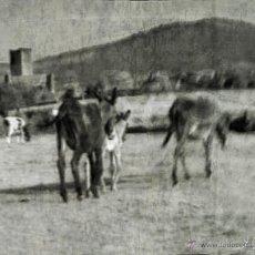 Fotografía antigua: FOTOGRAFIA RURAL EN BLANCO Y NEGRO. SALAMANCA, MIDE 30 X 21 CM.. Lote 41614068