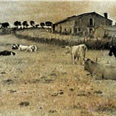 Fotografía antigua: FOTOGRAFIA EN BLANCO Y NEGRO RURAL DE SALAMANCA. MIDE 30 X 21 CM. Lote 41644027