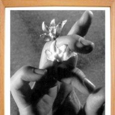 Fotografía antigua: FOTOGRAFÍA CONTEMPORÁNEA BODEGÓN CON MANO EVA LOOTZ. Lote 50188122