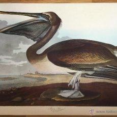 Fotografía antigua: ENORME FOTOTIPIA DE J.J. AUDUBON (1785-1851). BROWN PELICAN PL. 421. LEIPZIG EDITION. Lote 52647091